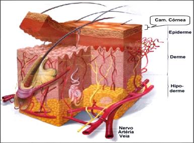 Permeação cutânea - Entendendo a barreira da pele