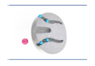 Cromatografia de Exclusão por Tamanho (SEC)