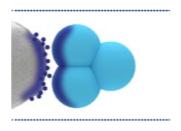 Cromatografia de interação hidrofóbica (HIC)